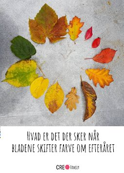 Hvad er det der sker når bladene skifter farve om efteråret